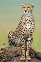 Animale cunoscute