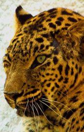 Test de biologie – Animale (3)