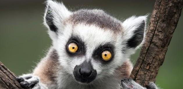 Curiozitati despre animale (4)