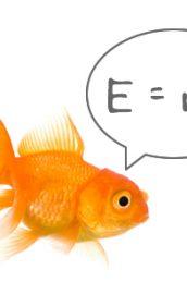 Care este cel mai deștept animal marin?