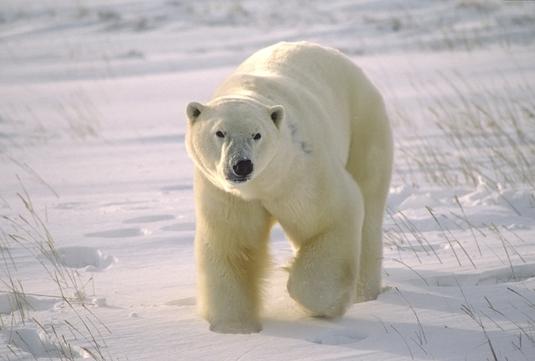 Test de biologie – Animale (4)