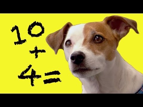 Matematica distractiva a lui Teo