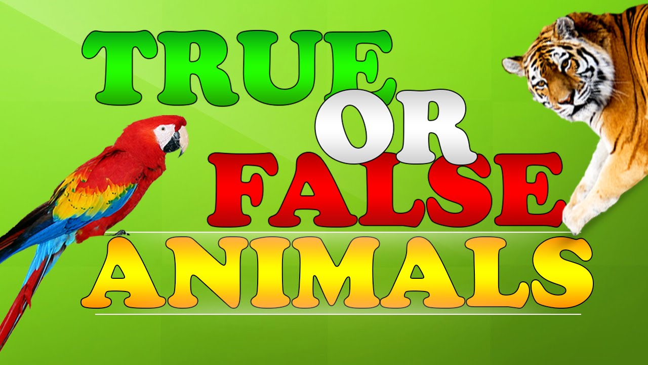 TRUE OR FALSE with ANIMALS