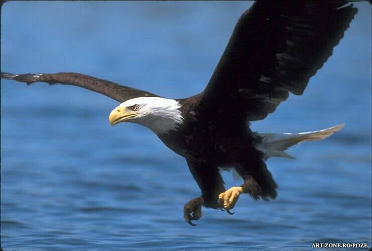 Vulturul