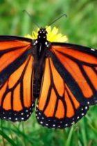 Fluturele și crisalida