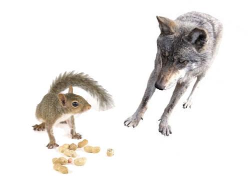 Lupul și veverița