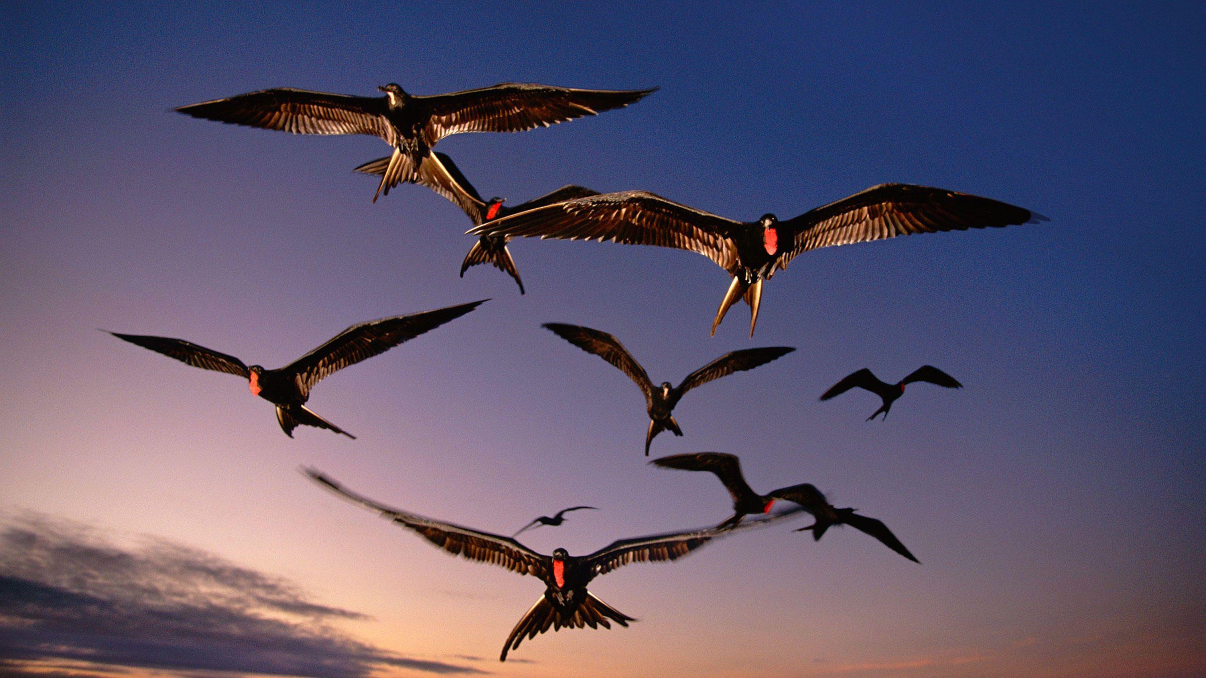 Incursiune în lumea păsărilor