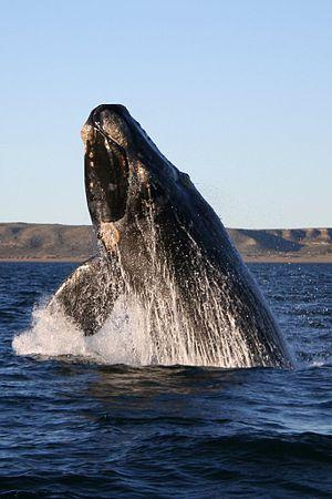 Curiozități despre animalele planetei noastre