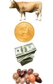 Istoria banilor