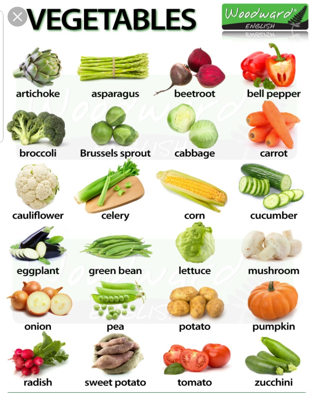 Learn the vegetables