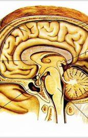 Diverse despre creier