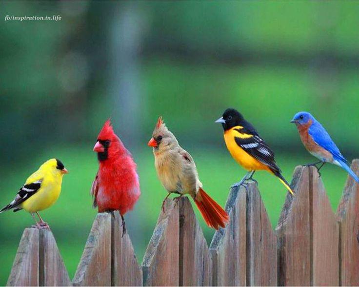 Birds – Pasari