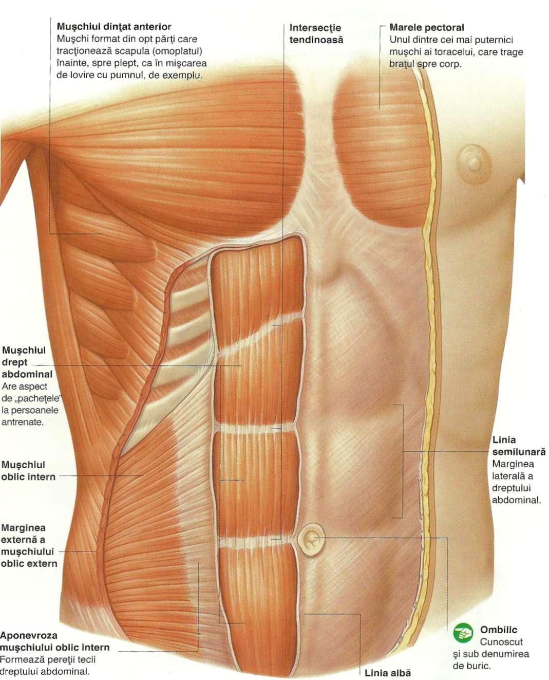 Corpul uman si bolile sale