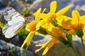 Curiozități despre plante si animale