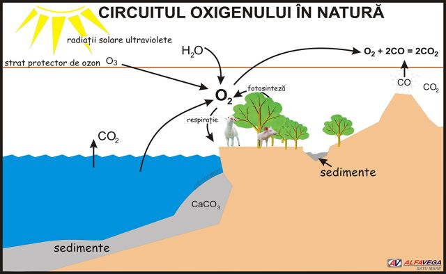 Oxigenul – generalitati, proprietati fizice
