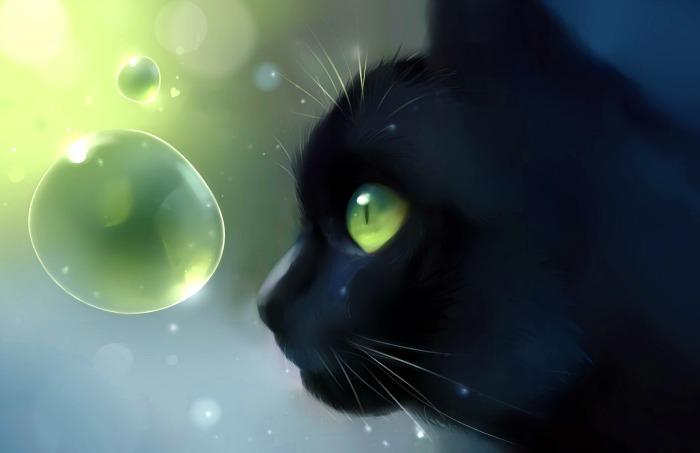 O pisică
