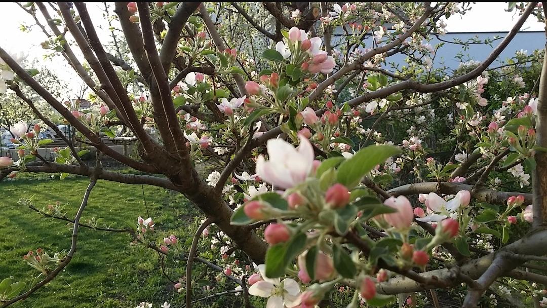 Primăvara A