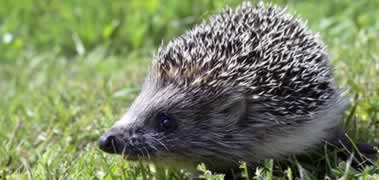 Denumiri de animale in engleza!!!
