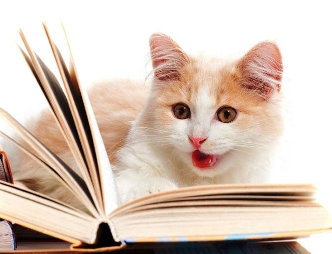 Să despărțim în silabe cu pisica!