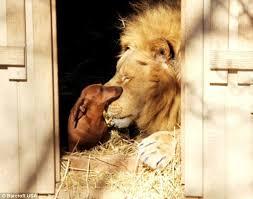 Leul şi căţeluşa