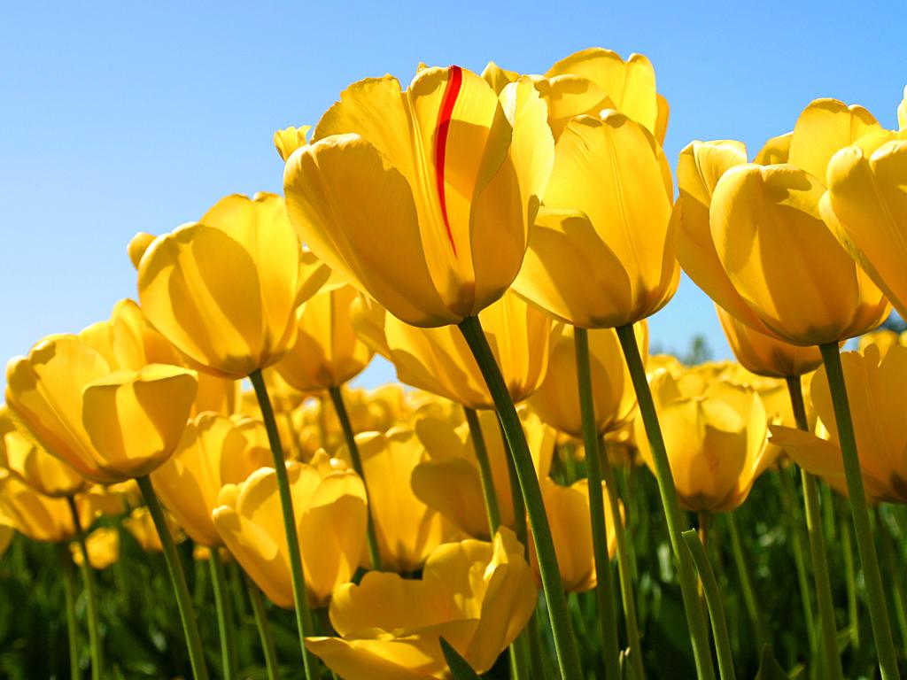 Matematică  ușoară cu FloareaRosie9