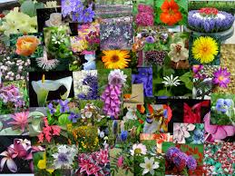 Silabe și flori