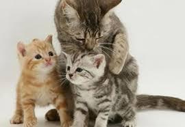 Alintăm cuvinte cu PisicaPortocalie17 (diminutive) (1)