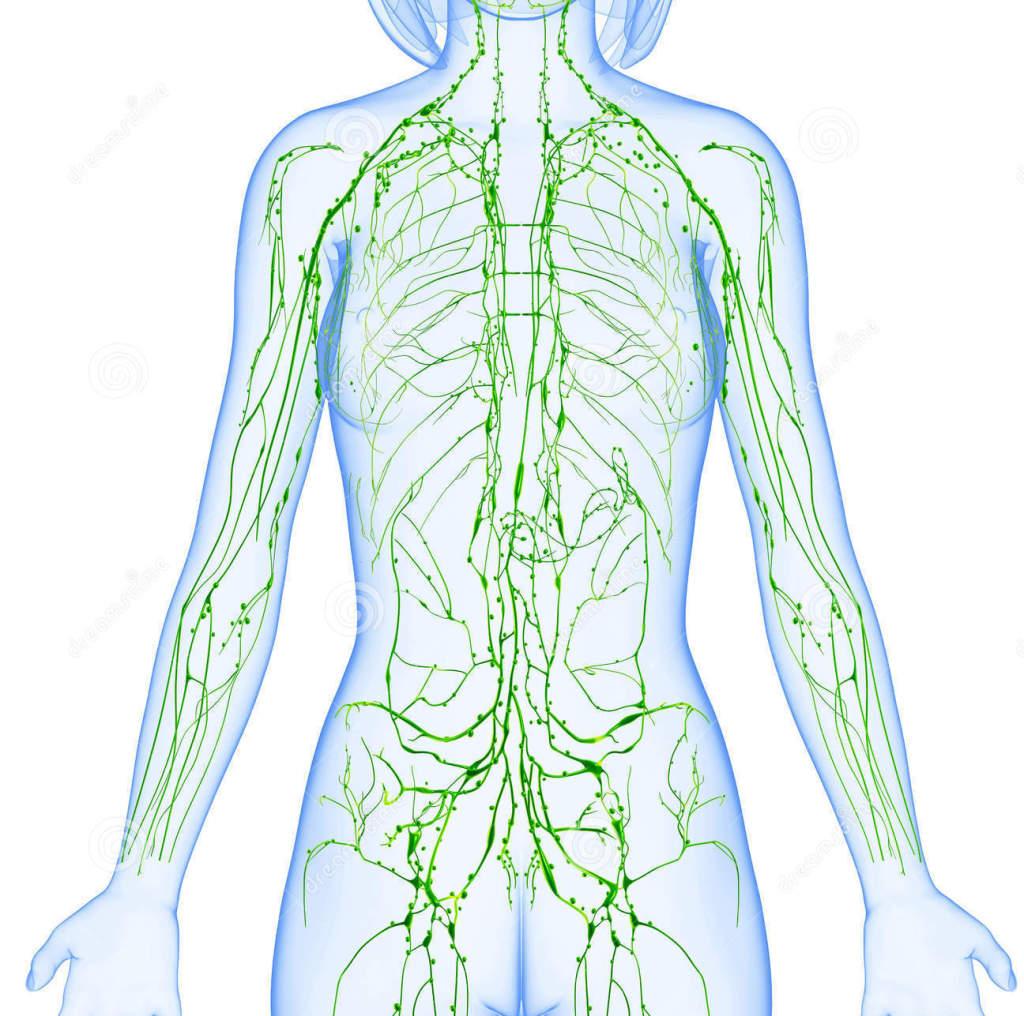 Limfa și sistemul limfatic