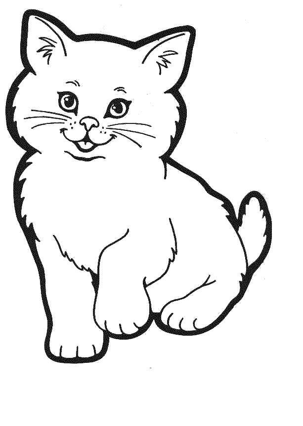 Calcule cu pisica