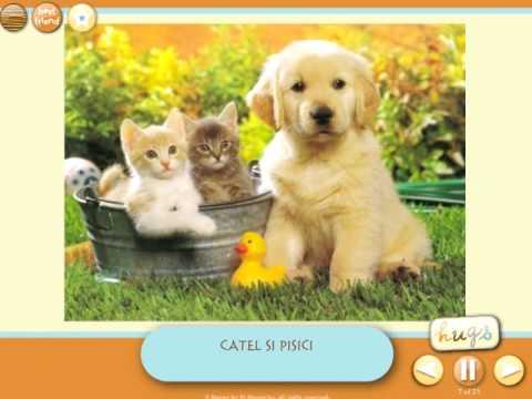 Animale domestice în engleză