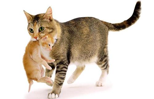 Pisici-Curiozităti