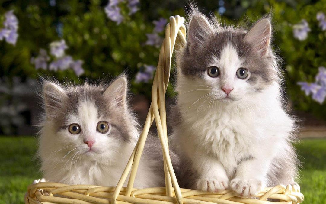 Motoşel şi Botoşel de Ana Blandiana…poezii cu pisici pentru pitici .