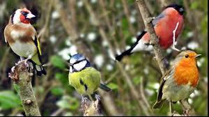 Ghicitori cu păsări ! (2)