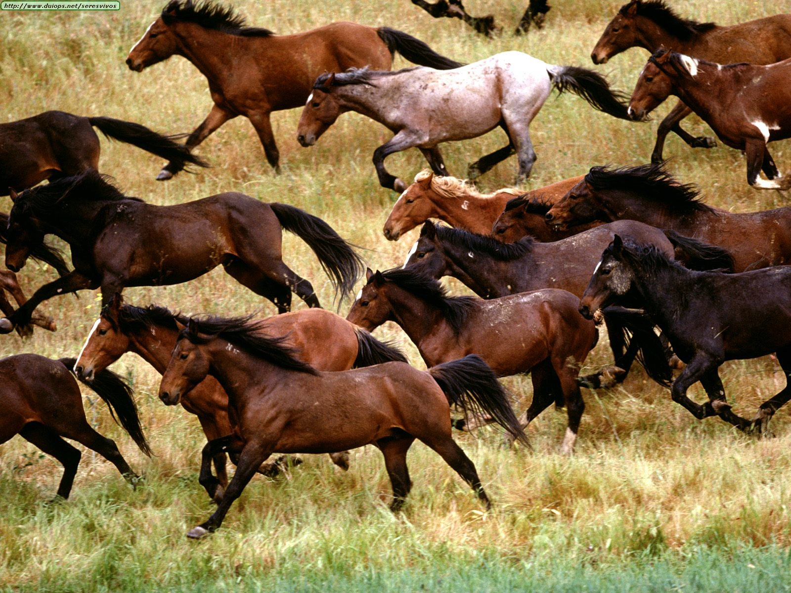 Minunata lume a animalelor-mustangul