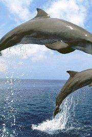 Minunata lume a animalelor-delfinul
