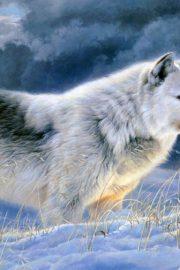 Minunata lume a animalelor-lupul de tundra