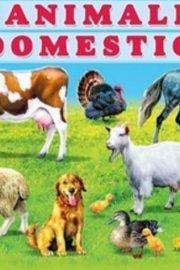 Animalele domestice in engleză