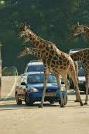 Im Safaripark
