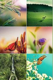 Curiozități din lumea plantelor