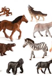 Animale pentru clasa 1B