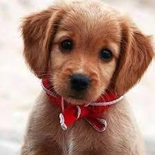 Câinele – cel mai bun prieten al omului