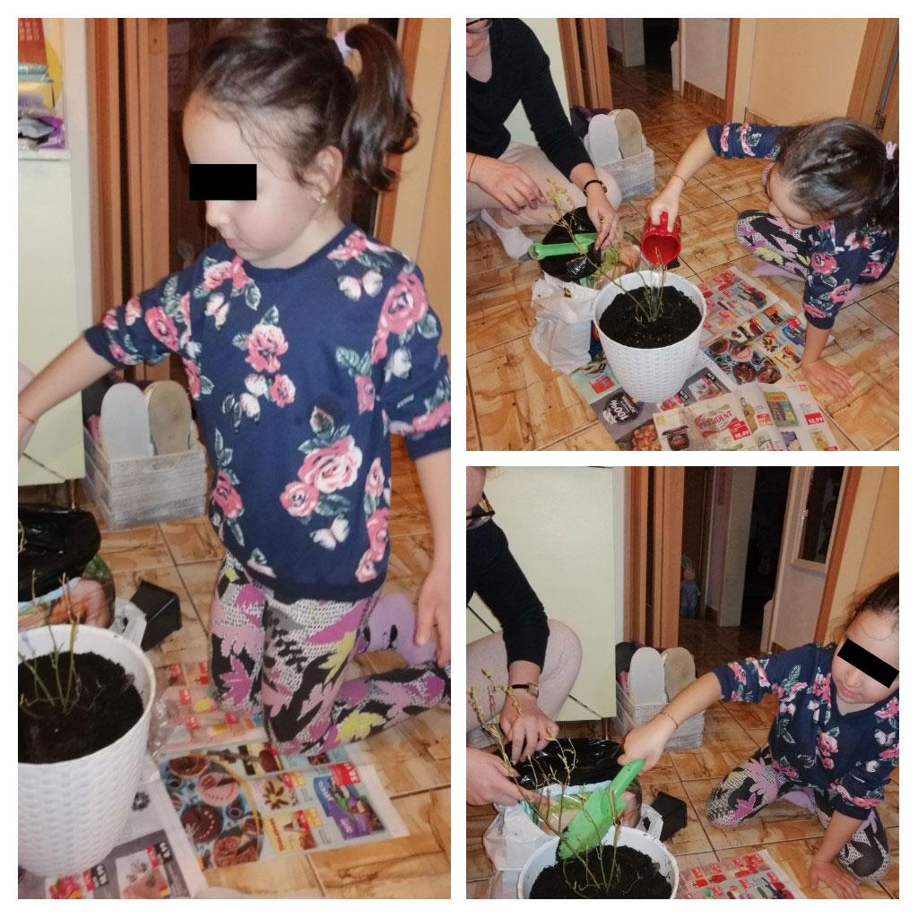 Plantez un butaș de afin
