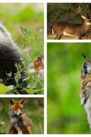 Intrebari de cultura generala despre animale