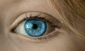 Ochiul la mamifere