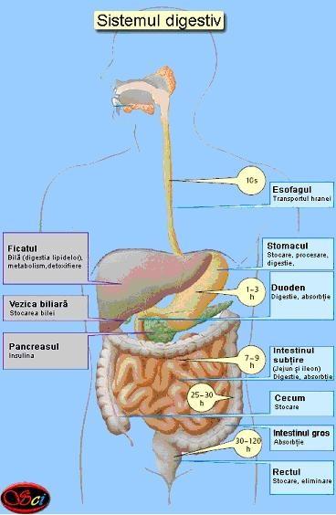 Functiile de nutritie