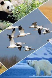 Animale si habitatul lor