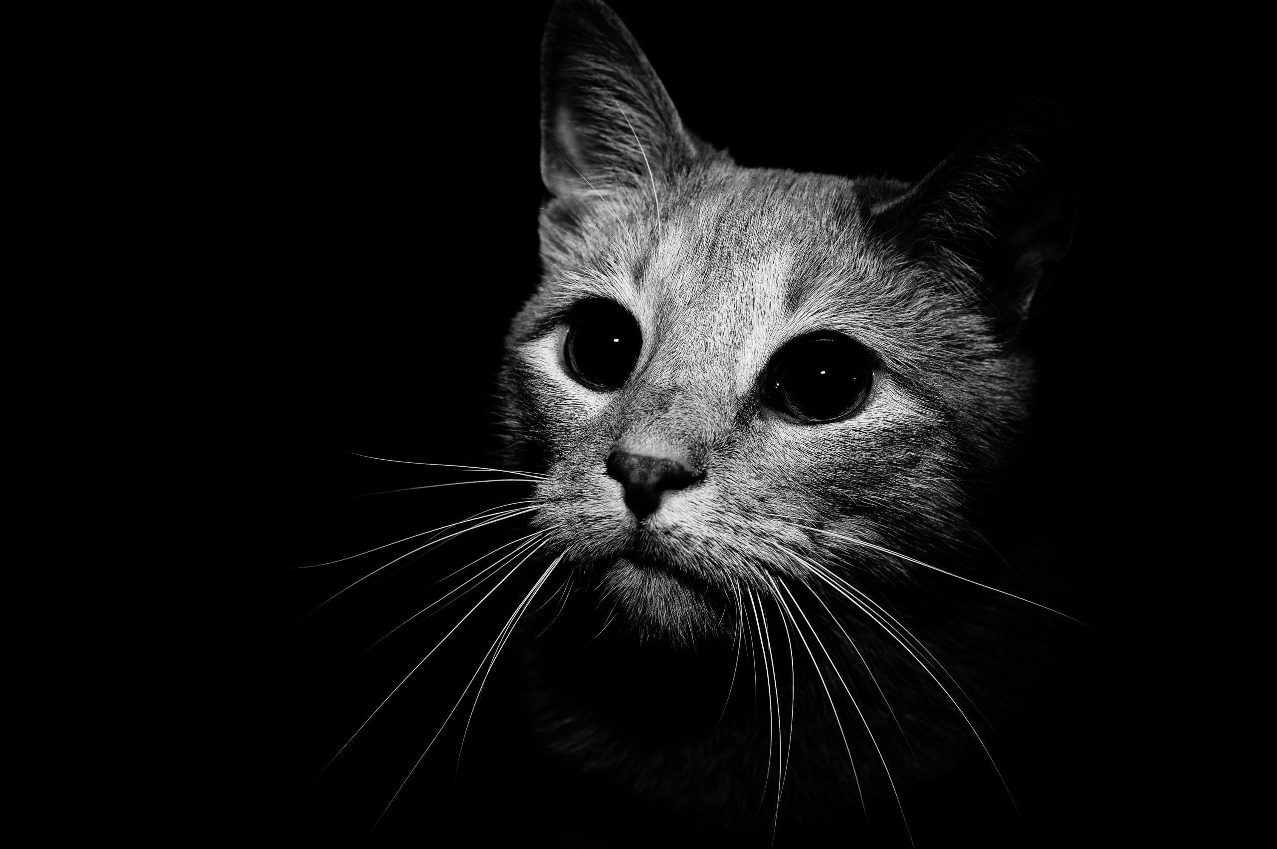 Pisicile Războinice : Viziunea
