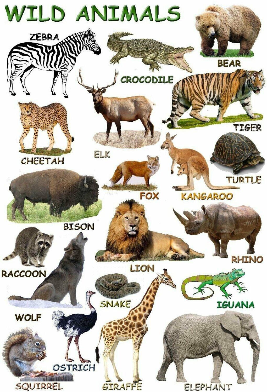 Animale. Test engleza