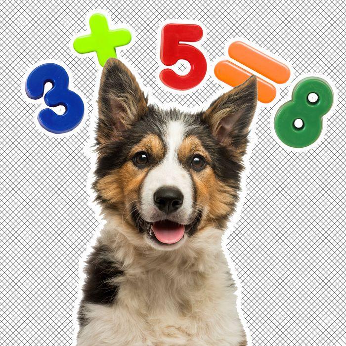 Azor iubește matematica