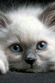 Cat de bine iti cunosti pisica?